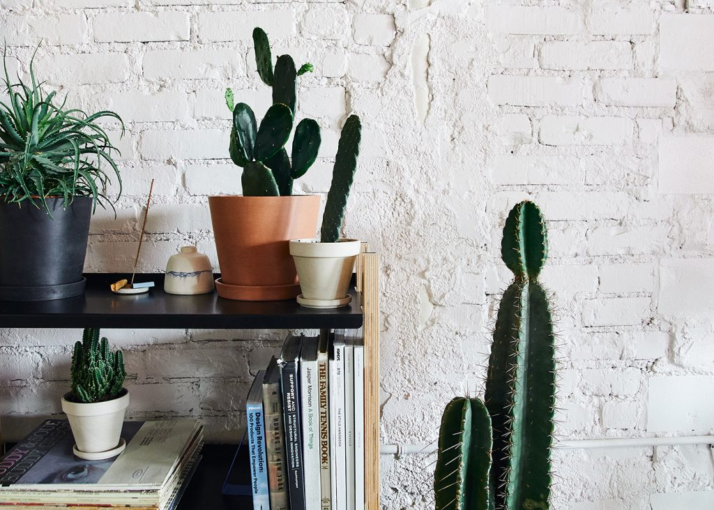 Bloomscape S New Collection Includes The Cutest Desktop Sized Cacti