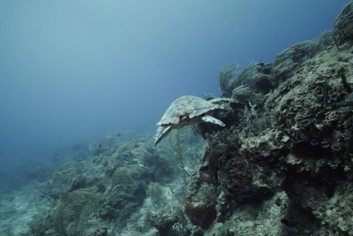 coral vita